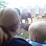 Wat een grote olifant