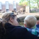 Daaag olifant